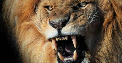 Cazador ilegal es asesinado por un león en África