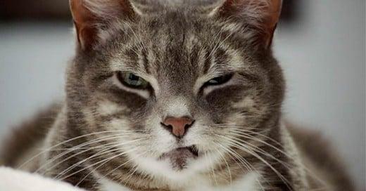 Los gatos tienen distintas personalidades y acaban viviendo con nosotros porque es una situación que beneficia al dueño y al animal