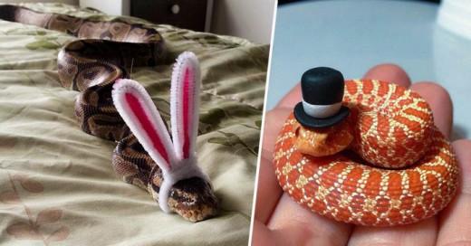 Una idea para hacer parecer mas amigables a las serpientes