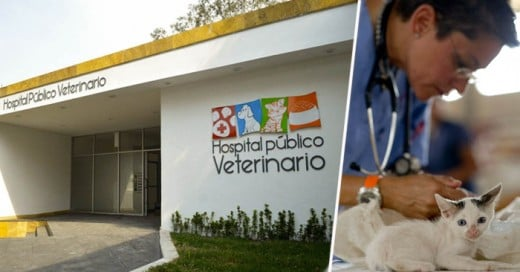 El Primer Hospital Veterinario GRATUITO de México es una Realidad ¡Enhorabuena!