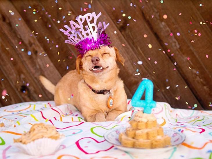 una perrita con un gorro de feliz cumpleaños frente a un pastel con un número cuatro encima