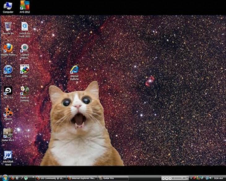 fondo de escritorio donde un gato esta viendo con cara de sorpresa el icono de internet explorer