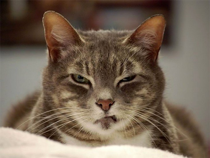 cara de un gato con un ojo entre cerrado mirando fijamente hacia enfrente