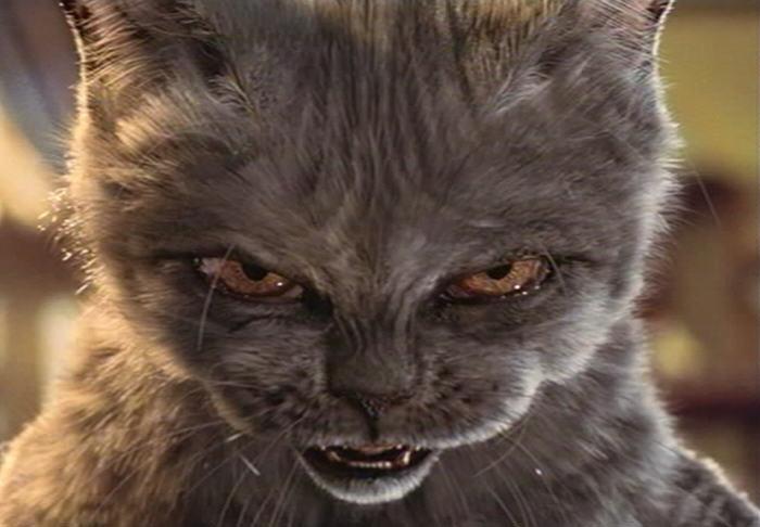 Cara de un gato enojado