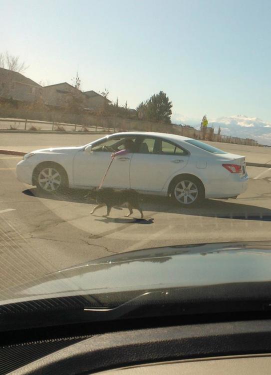 mujer en su carro paseando su perro por medio de una ventana