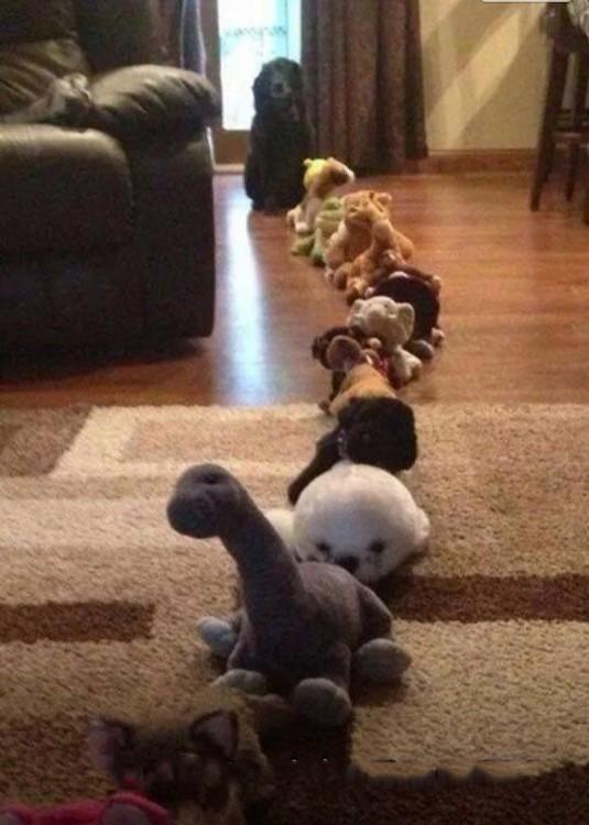fila de peluches en la sala de una casa donde al final esta un perro