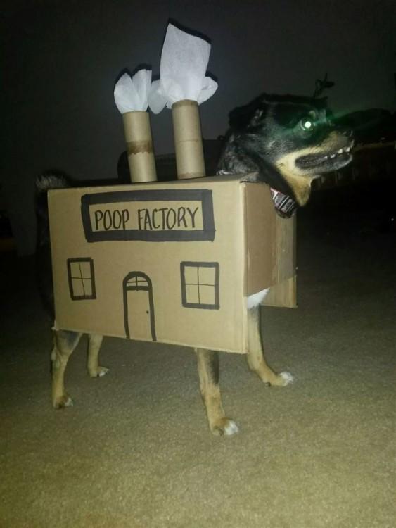 perro dentro de una caja con la frase 'Fabrica de popo'