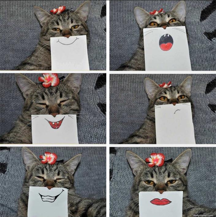 Fotos de un gato con diferentes bocas pintadas en un papel
