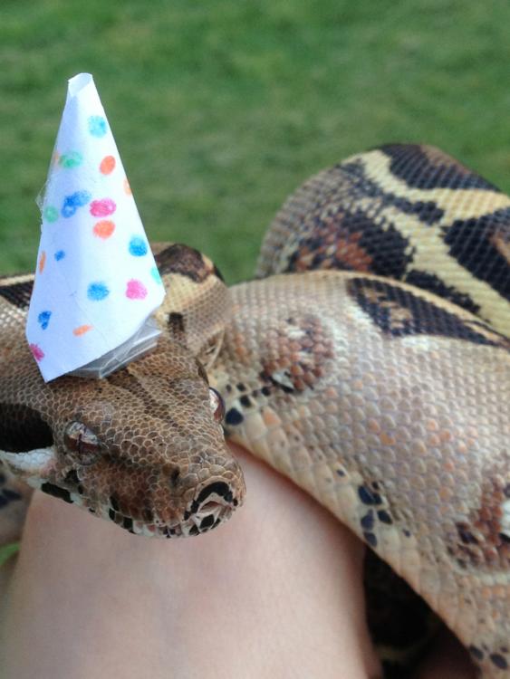 serpiente con un sombrero blanco con puntos de colores