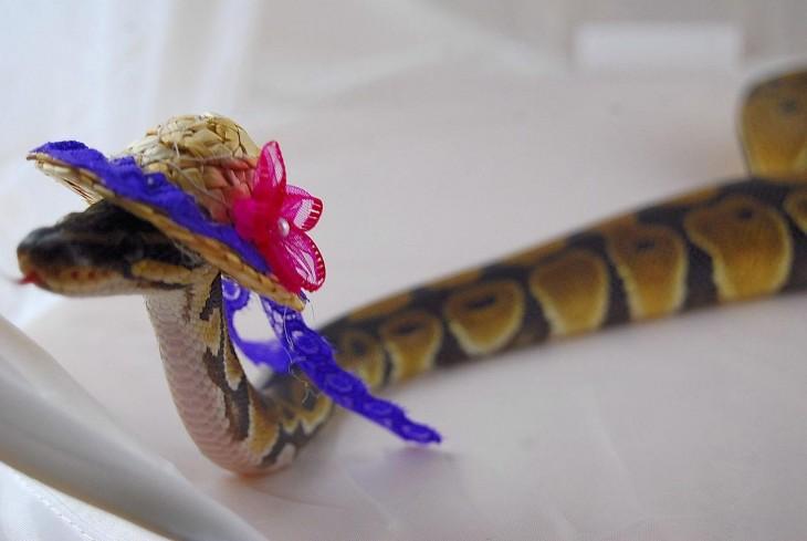 serpiente con un sombrero en la cabeza