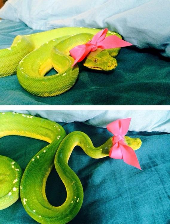 serpiente verde con un moño rosa sobre una cama