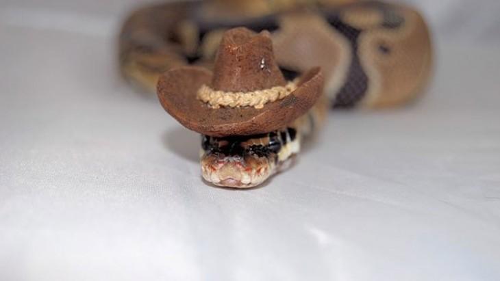 serpiente con un sombrero ranchero de color café