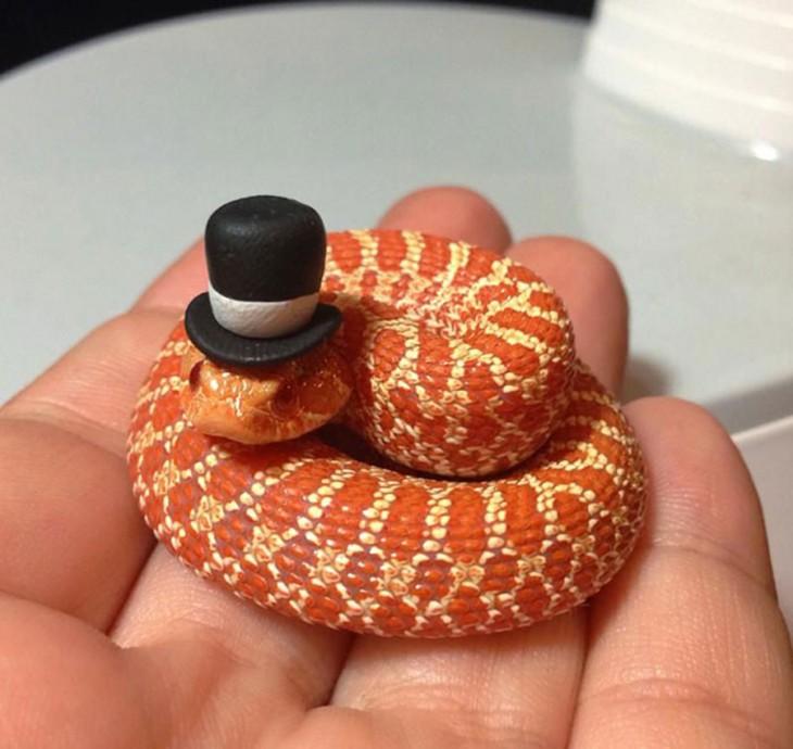 serpiente enrollada en una mano con un sombrero negro sobre su cabeza
