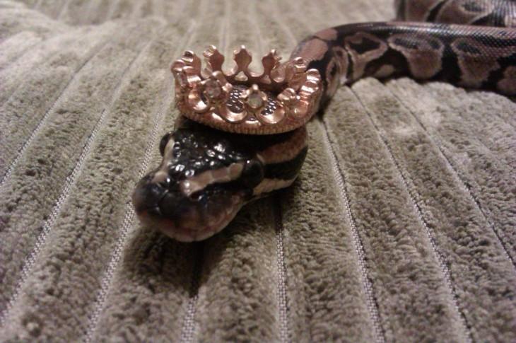serpiente sobre una alfombra con una corona sobre su cabeza