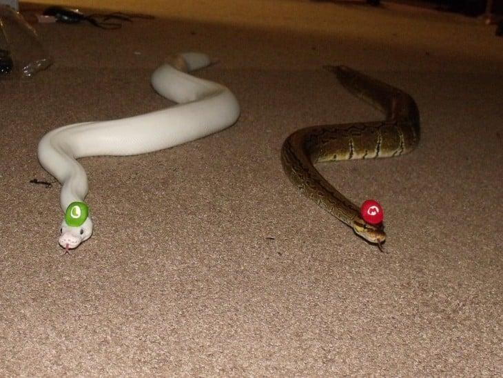Dos serpientes arrastrándose en el suelo con unos sombreros de Mario Bross