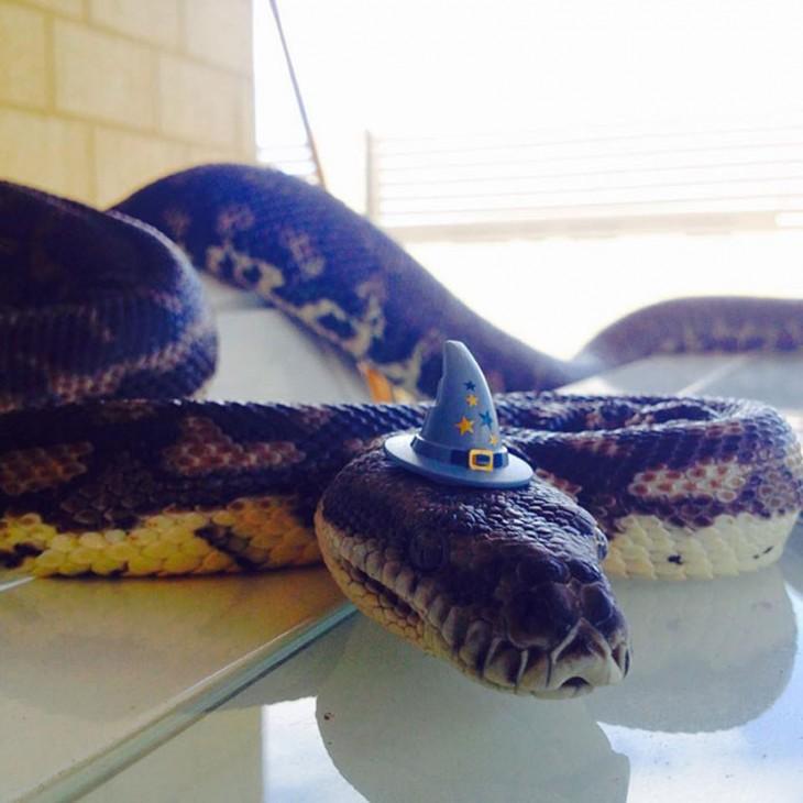 serpiente con un sombrero de brujo en color azul y estrellas