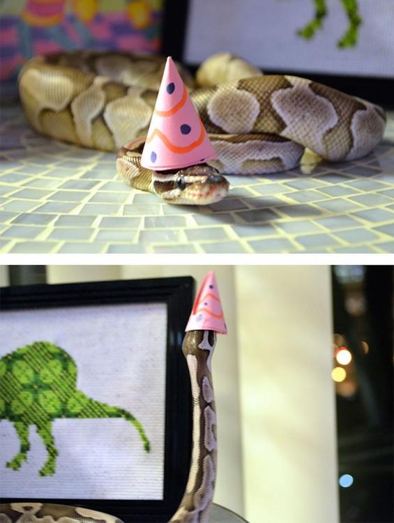 serpiente con un gorro de fiesta en color rosa sobre su cabeza