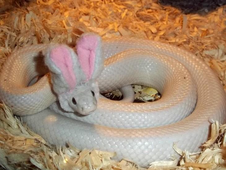 serpiente blanca enroscada con unas orejas de conejo sobre su cabeza
