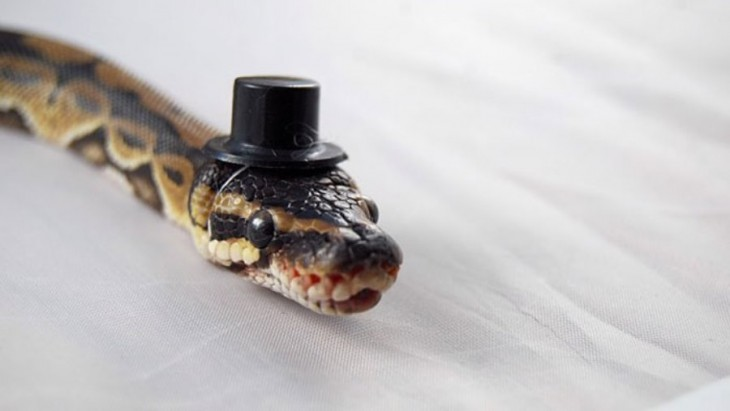 Cabeza de una serpiente con un sombrero en color negro