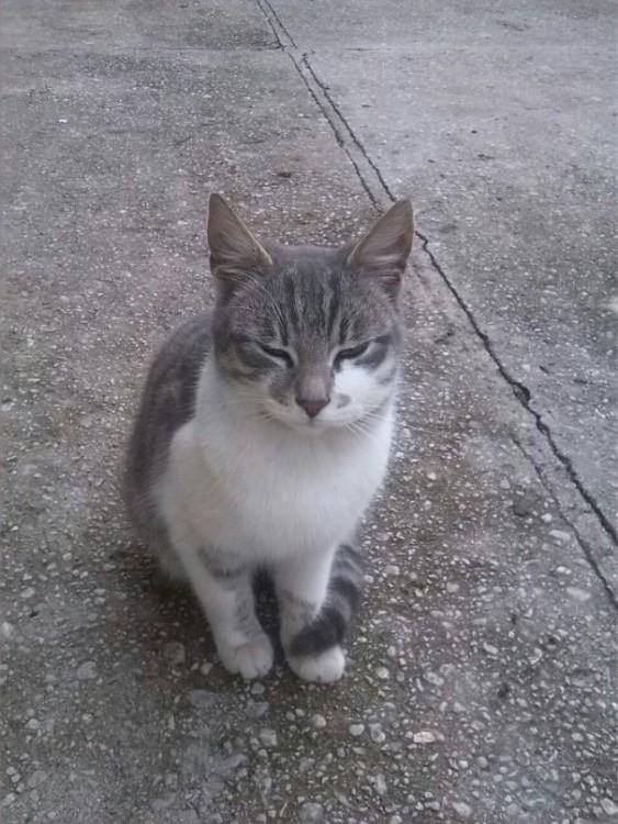 gatos con picaduras de avispas y sus efectos