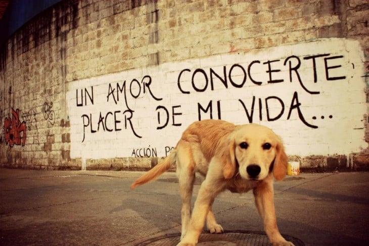 frase de acción poética en una pared y un perro frente a esa pared