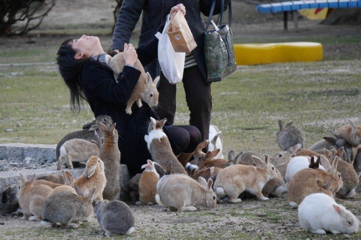 Okunoshima es una isla llena de conejos en el Mar Interior, Japón