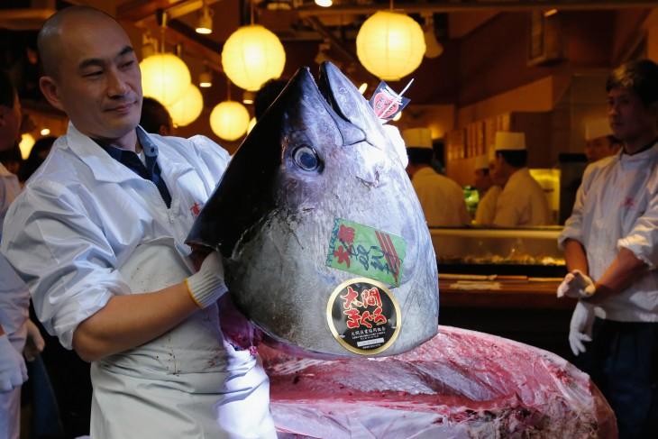 Cabeza de pez de 222 kg (489 lbs) en un restaurante de sushi