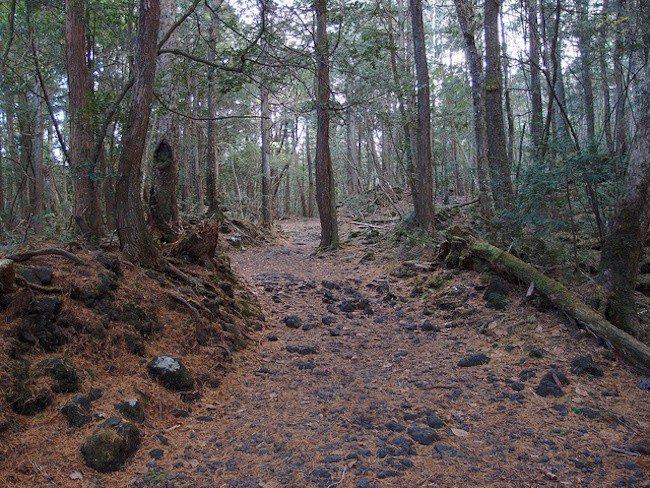 Bosque del suicidio en Japón
