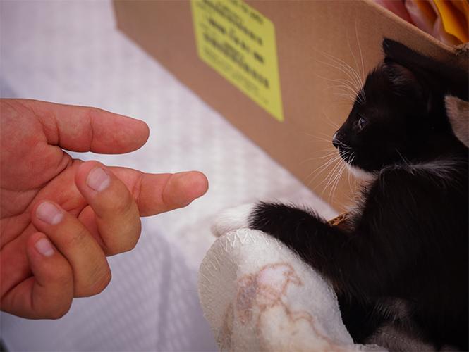 mano de una persona frente a un gato en color negro