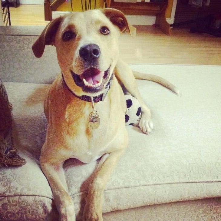 Lana ha sido adoptada por una familia en Ontario , Canadá