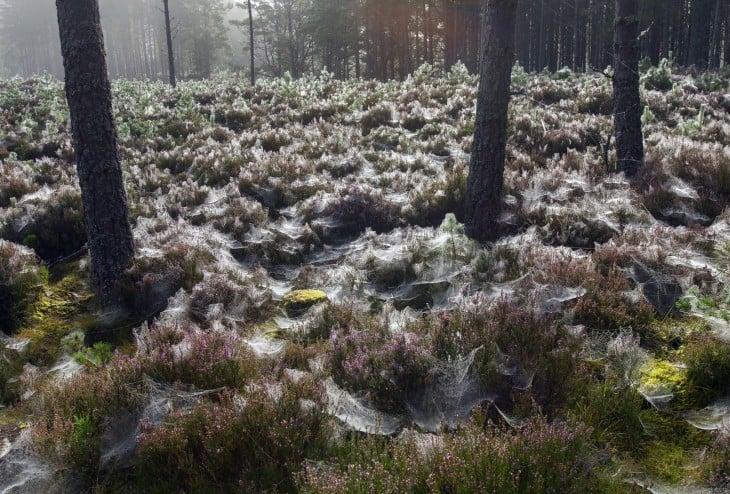 bosques escocés lleno de telearañas