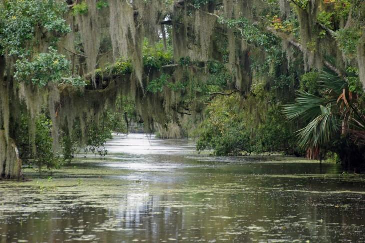 Pantanos de Louisiana en Estados Unidos