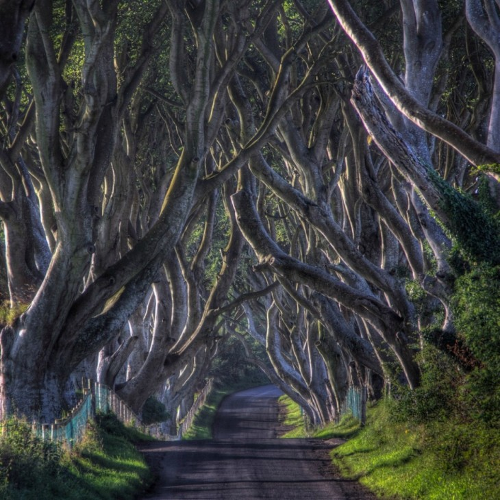 Camino Dark Hedges en Irlanda