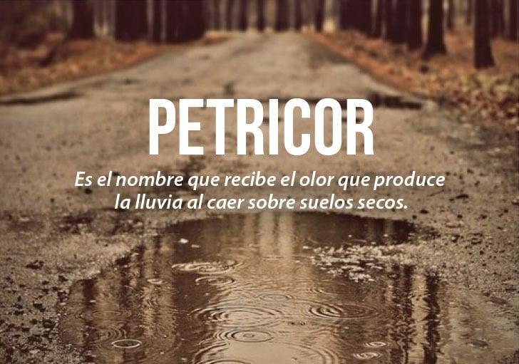 charco en el suelo con la definición de la palabra petricor
