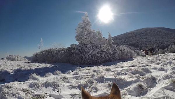 toma capturada por un perro que trae atada una GoPro a su espalda