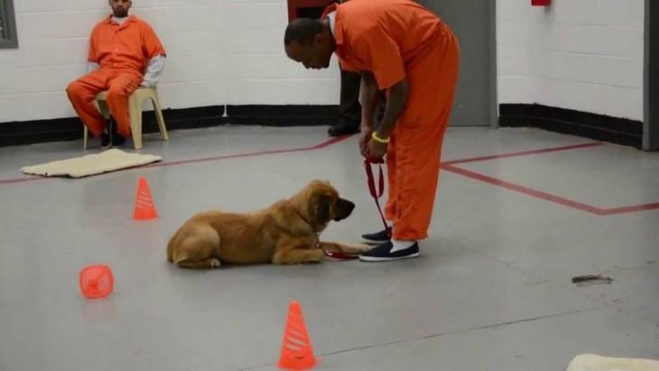 un preso entrenando a un perro dentro de una prisión en Estados Unidos