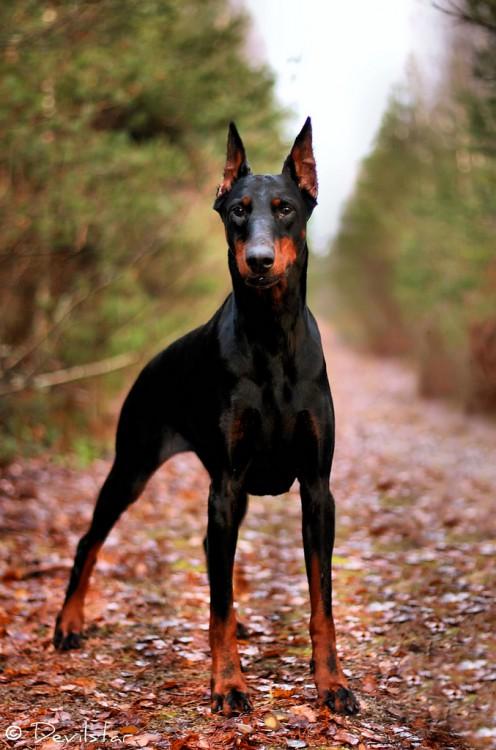 Las 15 razas de perros más inteligentes del mundo