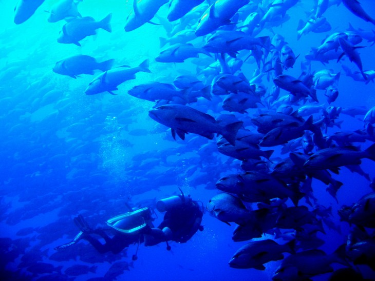 Buceo con barracudas en Sharm el Sheik, Egipto