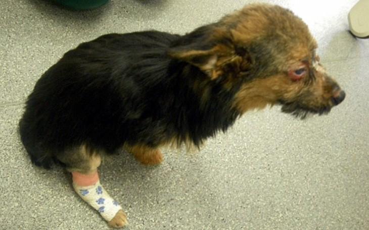 pequeño cachorro agredido parado en el suelo