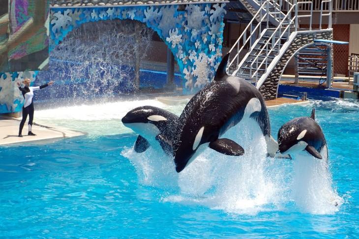 ballenas brincando en el show
