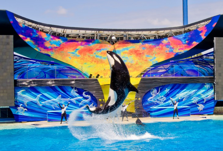 Ballena de sea world