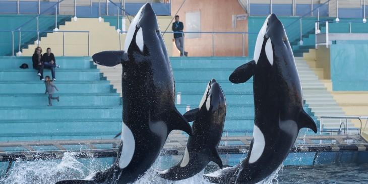 ballenas haciendo su show en seaworld