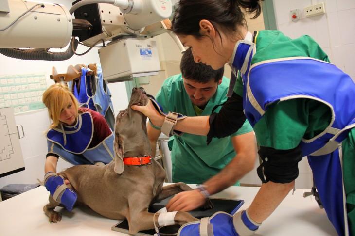 veterinarios alrededor de un perro sosteniendo sus patas y su cuerpo