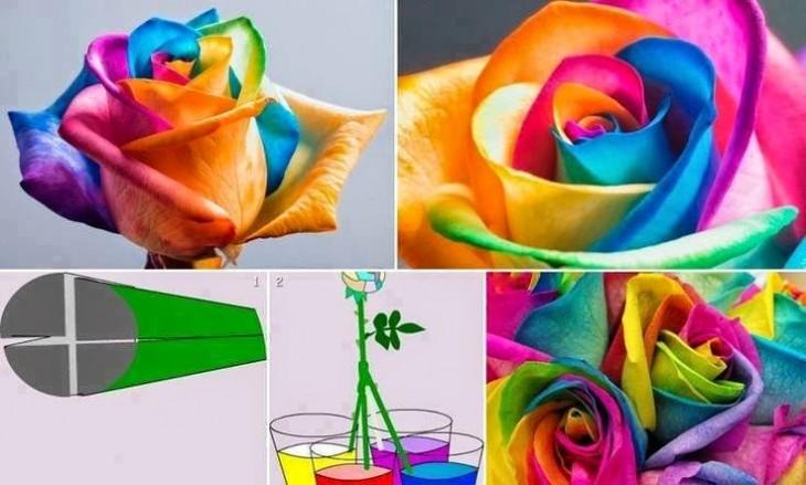 procedimientos de cómo crear rosas de color arcoíris