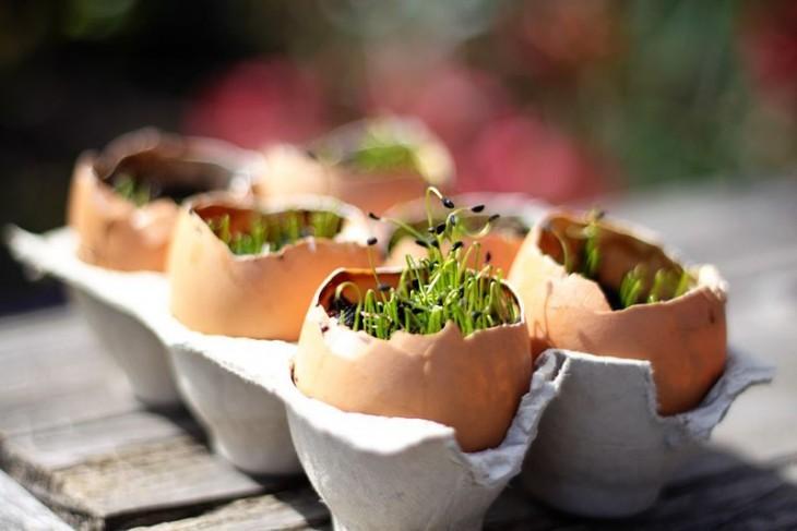 jardín fertilizante en una cáscara de huevo