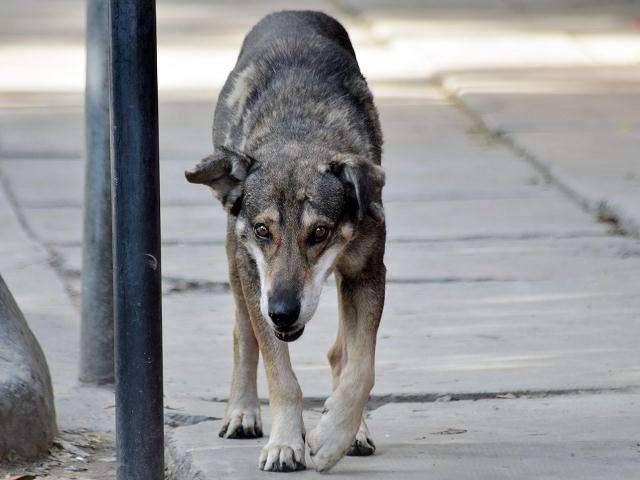 Huachito el perro boliviano que lleva 5 años esperando a su dueño muerto en la misma esquina