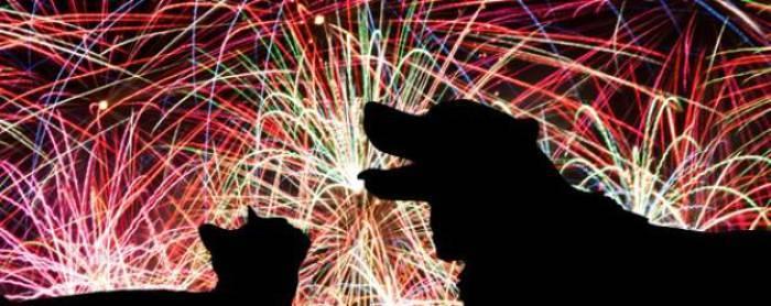 fuegos artificiales en los animales y las personas y sus efectos