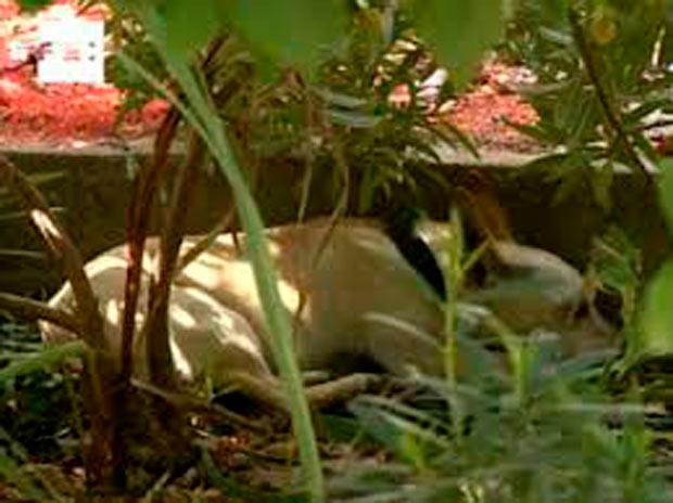 perrito que vive en el cementerio de Nerja, en Málaga