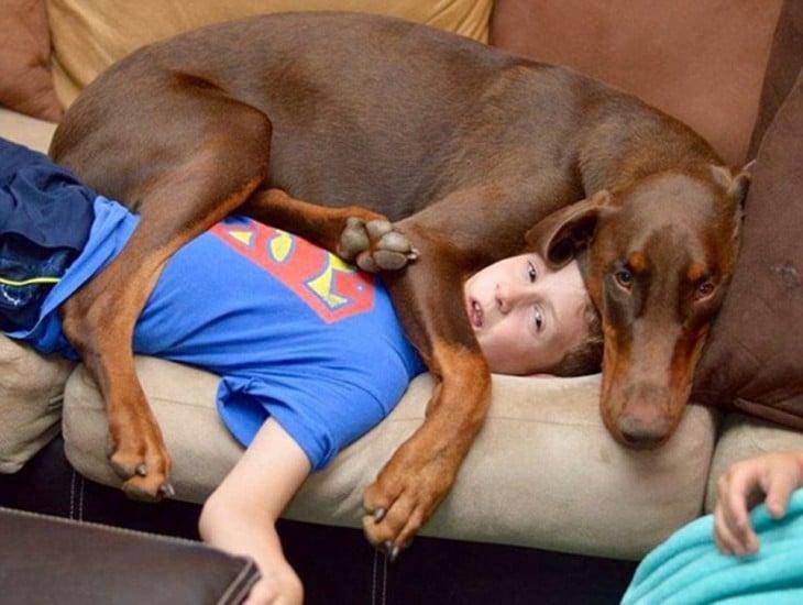 Perro que esta encima de su dueño niño porque se quedo dormido, cuando despertó se encontró con su fiel amigo encima de él