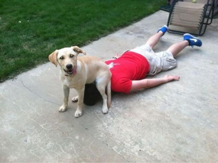 Perro labrador le puso el trasero a su dueño en la cara después de que este se cayera